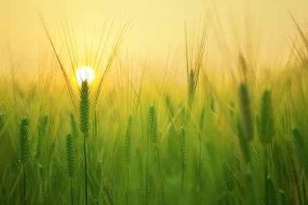 grass photo.jpg
